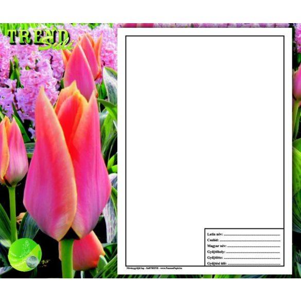 Növénygyűjtő lap SuliTREND A/4 250g 10ív